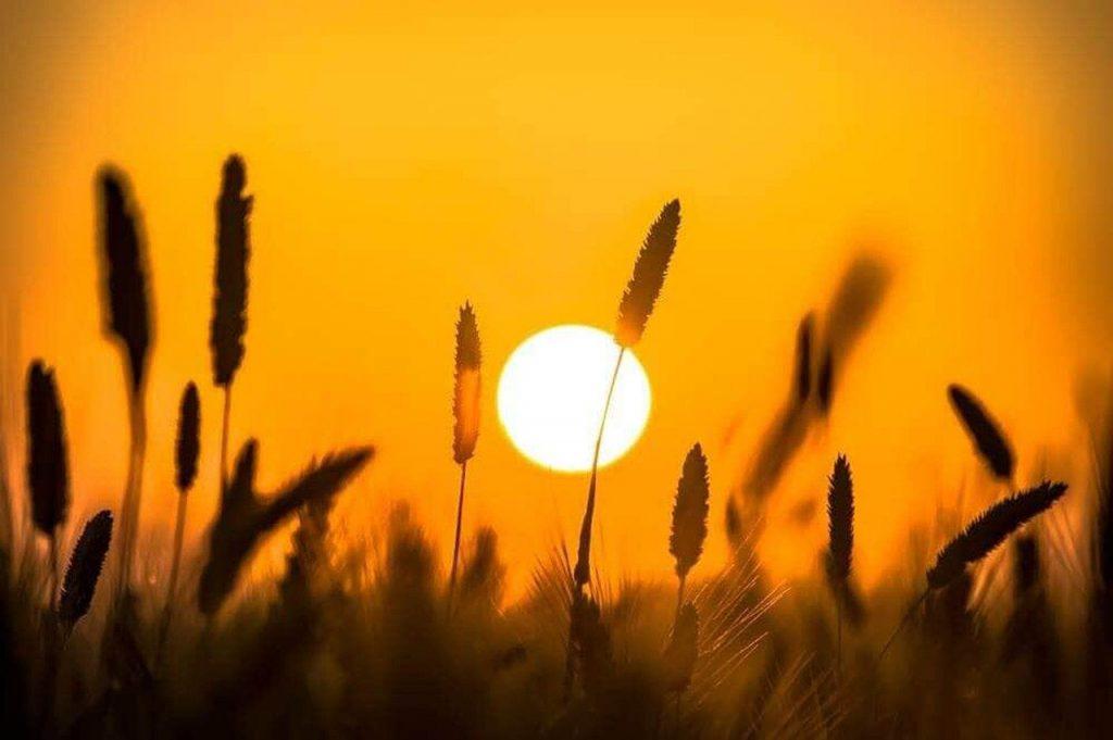 sunset, beach, outdoor